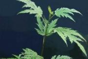 <strong>Moraceae - Ficus lateriflora - Vahl</strong><br />© Sarrailh Jean-Michel / CIRAD
